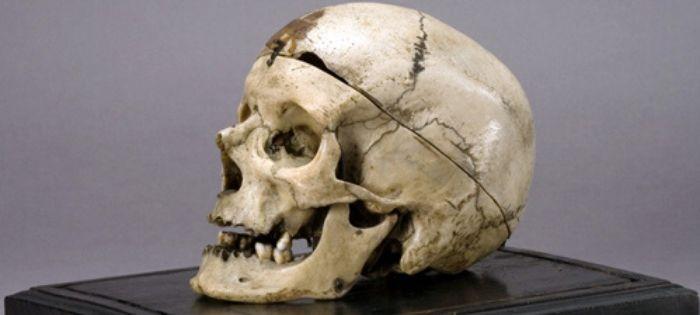 "Criminal Profiling – Museo Antropologia Criminale ""Cesare Lombroso"""